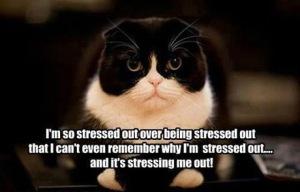 Stresssss
