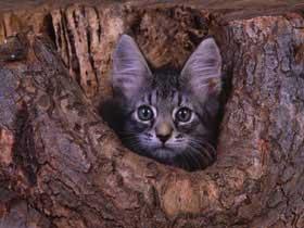 CAT03RK256303